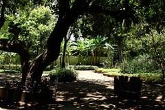 Jardín botánico. Ciudad de Guatemala. Foto: Jorge Rodríguez/Viatori