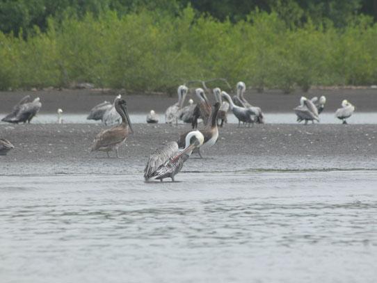 Los humedales son hogar de una gran biodiversidad marina, de aves y mamíferos. Foto: Jorge Rodríguez/Viatori