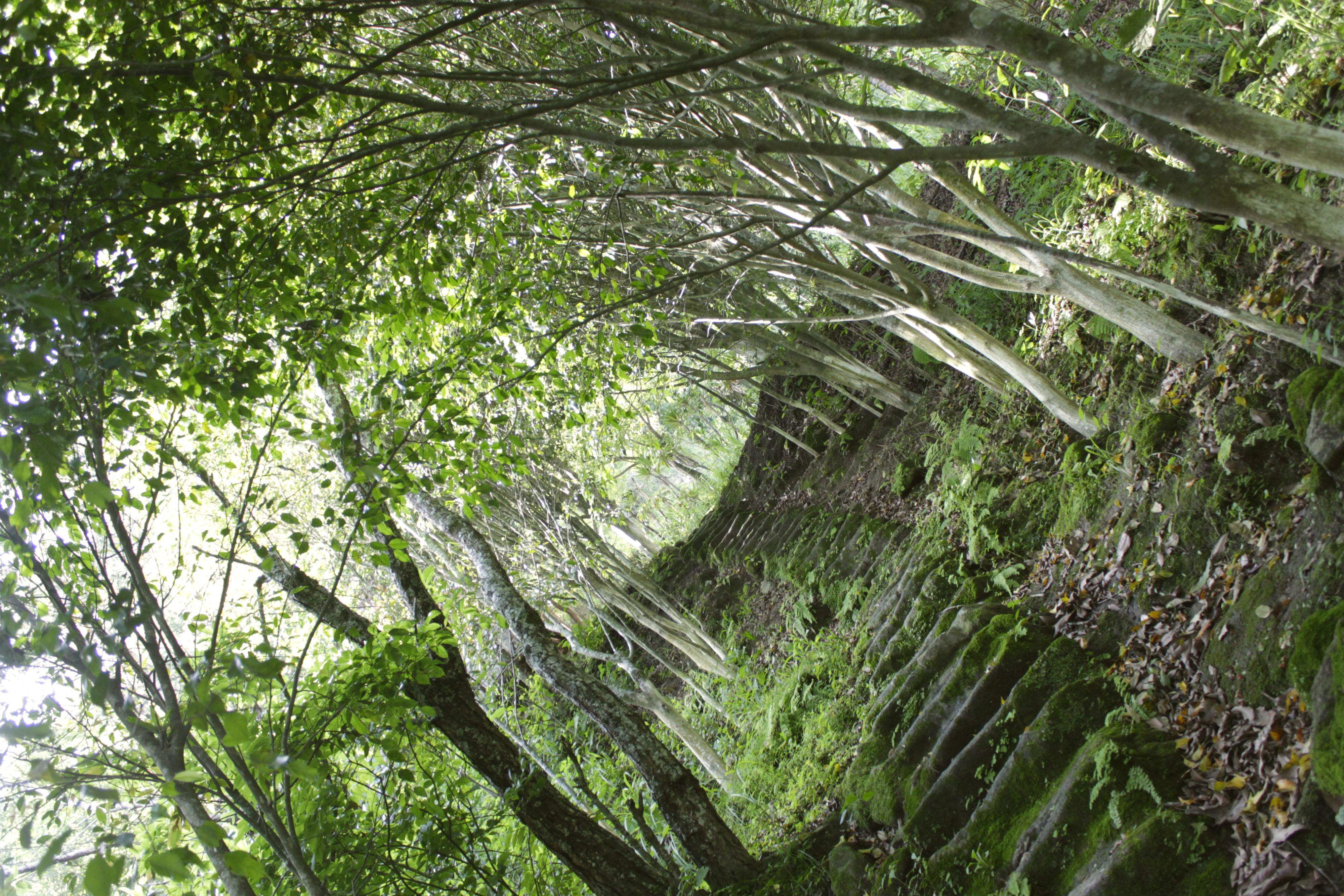 Zonas boscosas de San Marcos